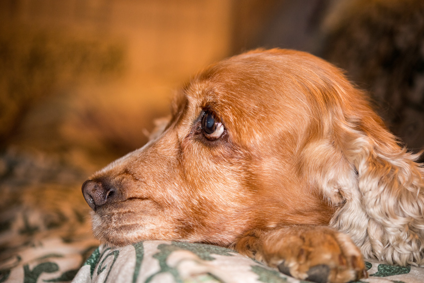 dog sense of smell