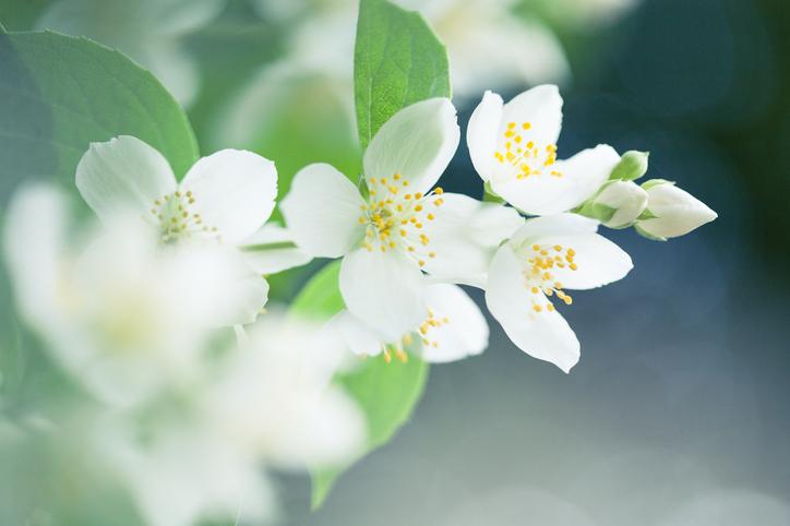 Refreshing Fragrances