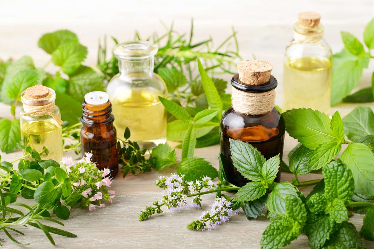 Fragrance Facts: Uses and Benefits of Verbena Oil | Parks Candles