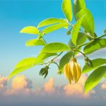 Fragrance Facts: Uses and Benefits of Ylang Ylang