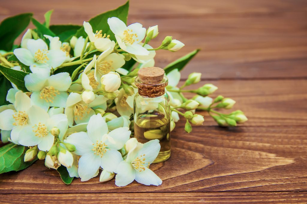 Jasmine essential oil. selective focus. medicine and nature.