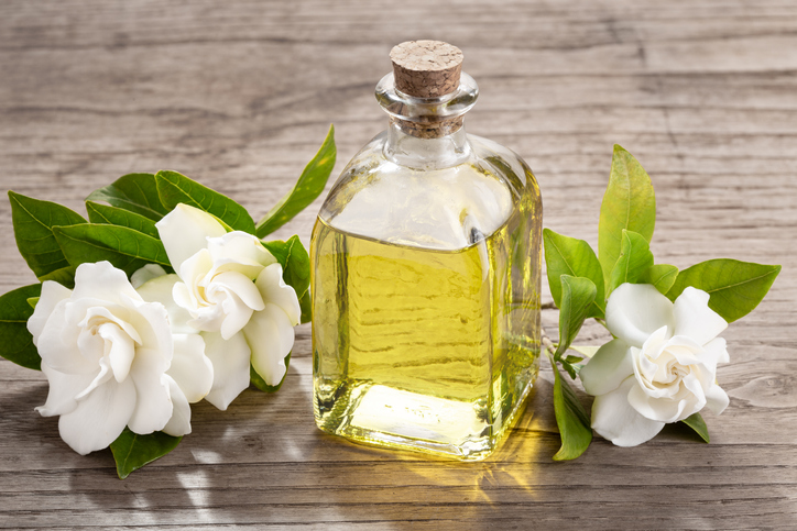 Fragrance Facts: Uses and Benefits of Gardenia Oil | Parks Candles