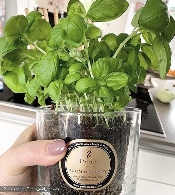 Re-use your candle jar as a plant pot.